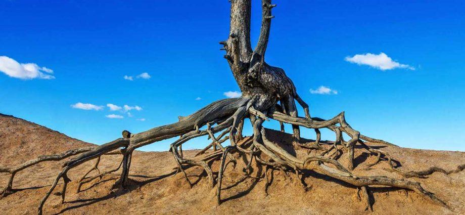 no roots no citizenship